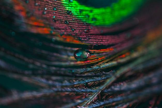 Wassertropfen auf abstraktem makro exotischem pfaufederhintergrund