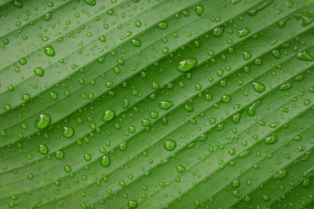 Wassertropfen auf bananenblatt backgroung
