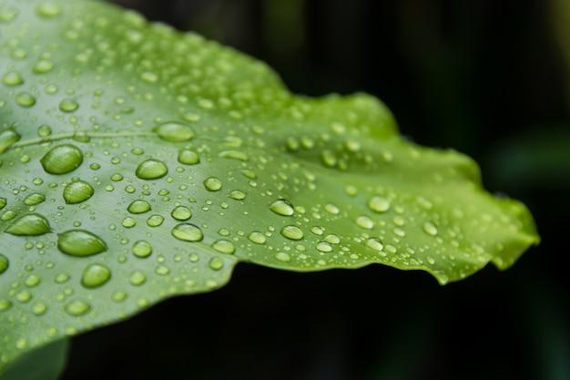 Wassertropfen auf blättern in der natur.