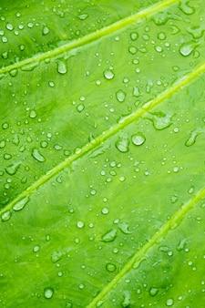 Wassertropfen auf blatt, grüne blätter in der natur. selektiver fokus.
