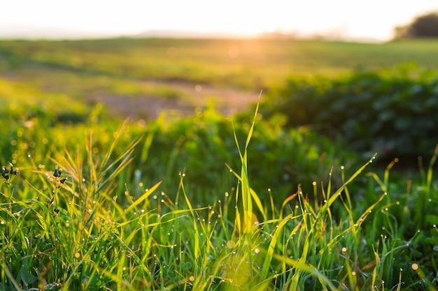Wassertropfen auf dem grünen gras. frisches gras mit tautropfen hautnah