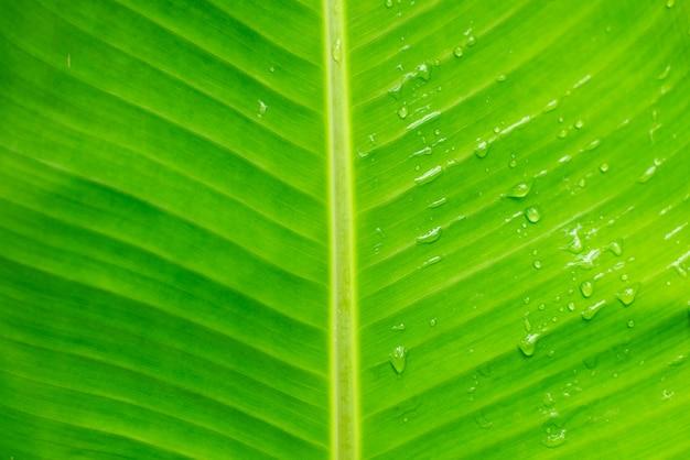 Wassertropfen auf grünem bananenblatthintergrund