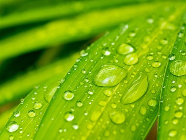 Wassertropfen auf grünem palmblatt