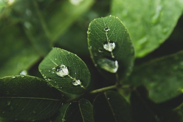 Wassertropfen auf grünen blättern im wald Premium Fotos