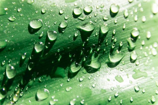 Wassertropfen auf grünen blättern
