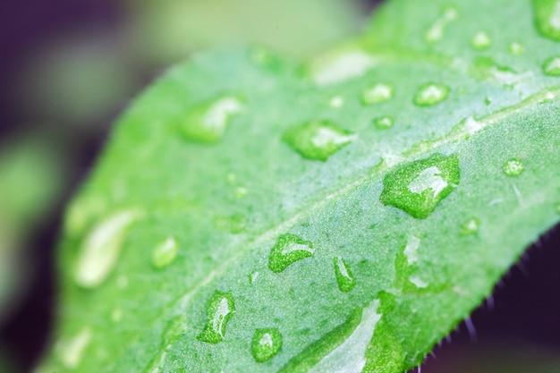 Wassertropfen auf pflanzenblättern.