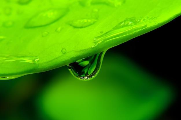 Wassertropfen, der vom grünen blatt fällt