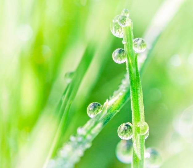 Wassertropfen mit der reflektierenden sonne auf einem grünen grashalm auf hellgrünem hintergrund