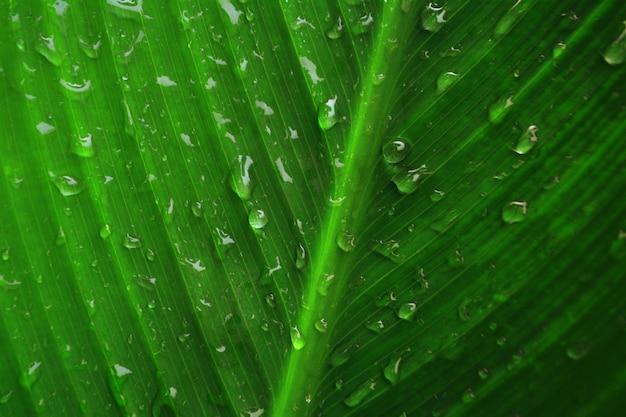 Wassertropfen, tautropfen auf frischem frühlingsnaturhintergrund der grünen blattbeschaffenheit