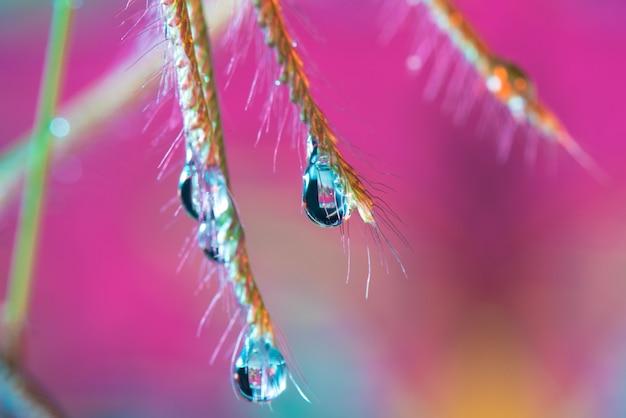 Wassertropfen vom gras des makros