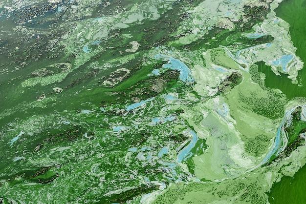 Wasserverschmutzung durch grünalgen, abwasser, umweltprobleme