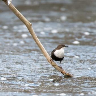 Wasservogel thront auf dem ast eines baumes