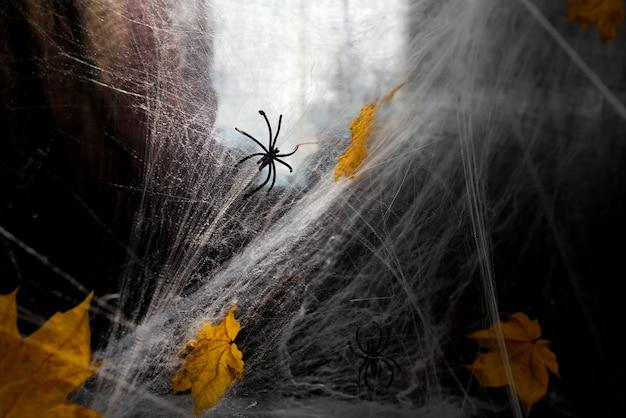Web des spinnennetzes oder der spinne gegen einen schwarzen hintergrund