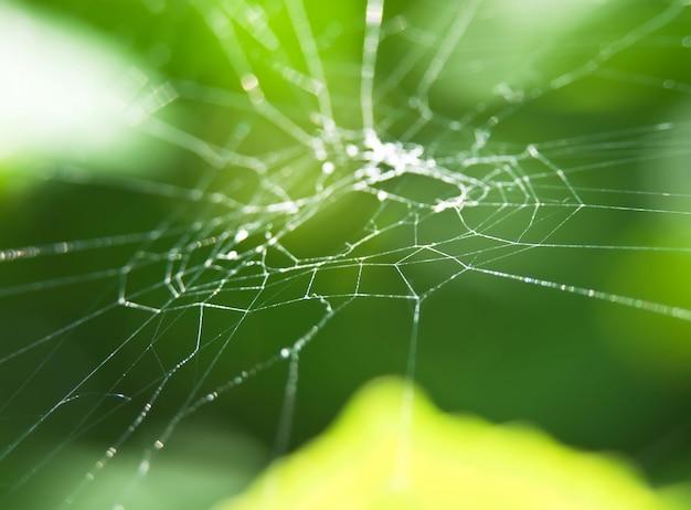 Web im garten