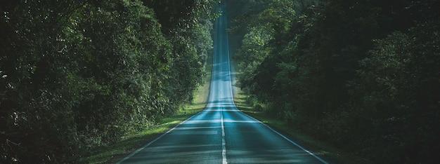 Weg durch das konzept des natürlichen weges des herbstlichen waldes