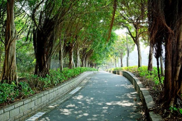 Weg durch den park