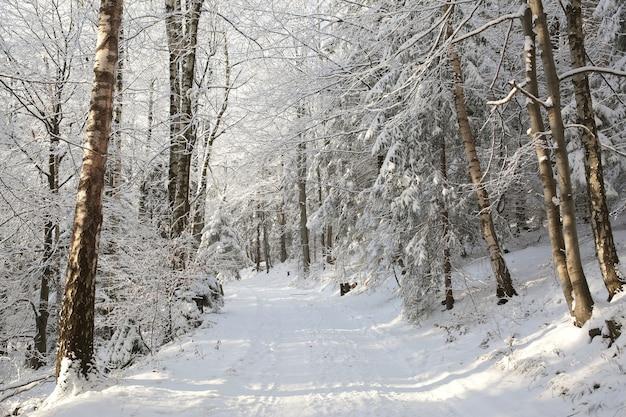 Weg durch den wald an einem sonnigen wintermorgen