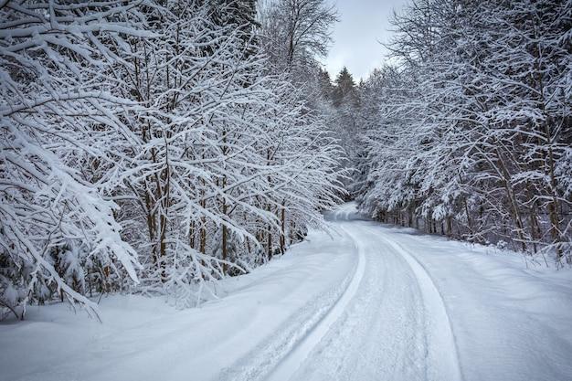 Weg durch verschneiten wald im winter, litauen