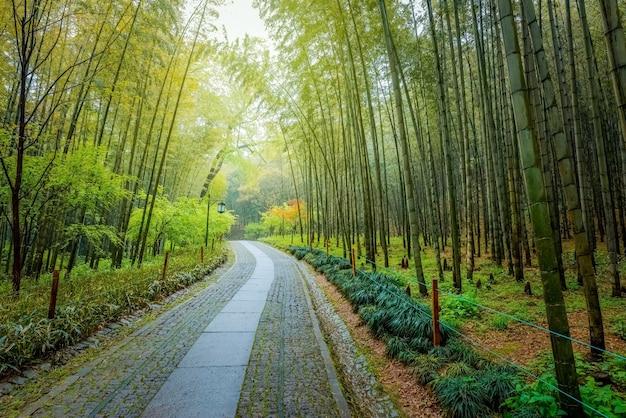 Weg im frühjahr mit bambusbäumen, ein weg in einem touristenpark in china