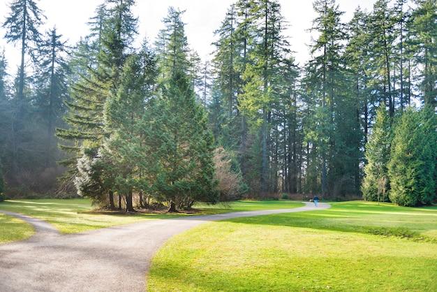 Weg im grünen sonnigen park mit großen bäumen, rasen und strahlender sonne