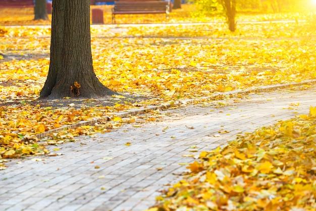 Weg im herbstlichen stadtpark mit gelben blättern