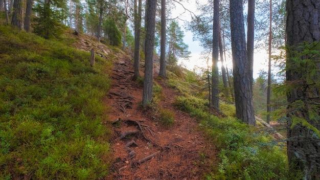 Weg in den bergen von karelien im herbst