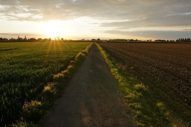 Weg in der mitte eines grasfeldes unter einem bewölkten himmel