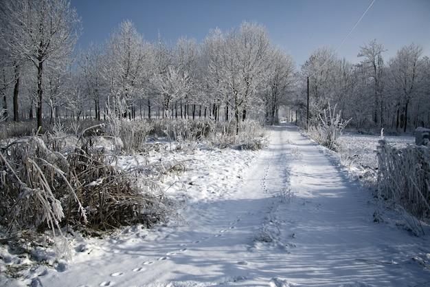 Weg in einem park, umgeben von bäumen, die tagsüber im sonnenlicht mit schnee bedeckt sind