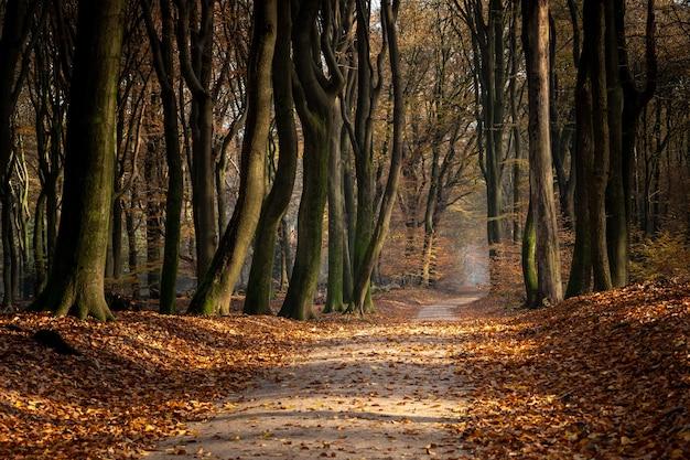 Weg in einem wald, umgeben von bäumen und blättern im herbst