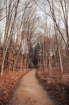 Weg in einem wald, umgeben von blättern und bäumen unter einem bewölkten himmel