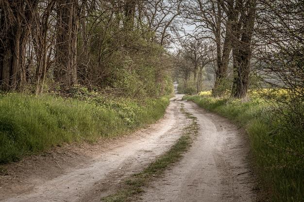 Weg in einem wald, umgeben von wunderschönem grün