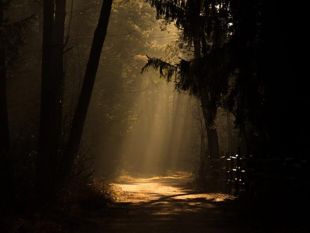 Weg mitten in einem wald mit dem sonnenlicht in der ferne