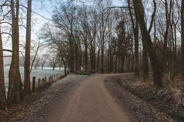 Weg umgeben von viel grün in einem wald mit einem see
