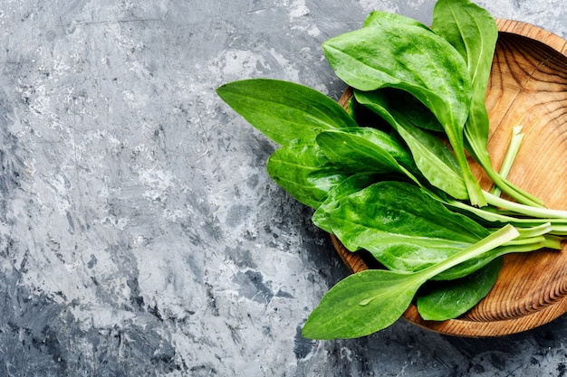 Wegerich-wertvolle heilpflanzen