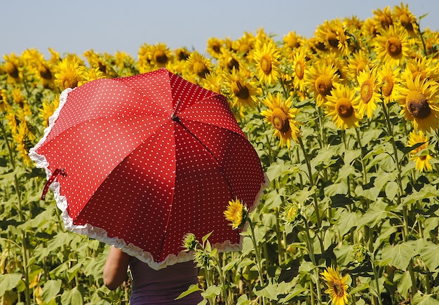 Weibchen, das einen roten regenschirm an hand in einem sonnenblumenfeld hält