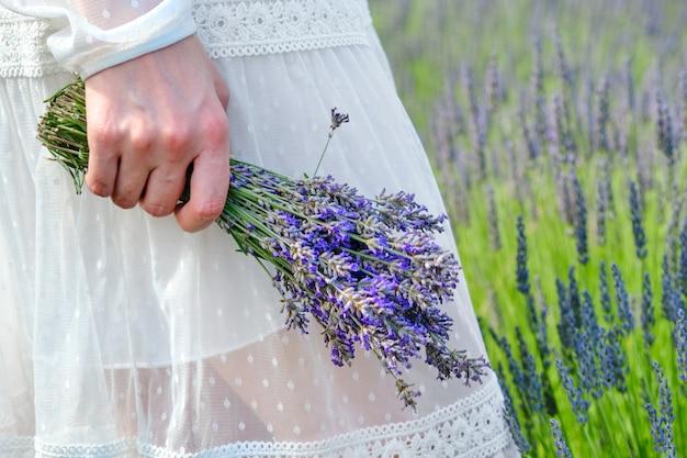 Weibchen in einer weißen kleidhand, die einen blumenstrauß des lavendels auf dem hintergrund des lavendelfeldes hält