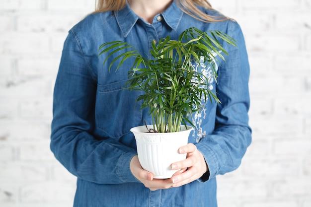 Weibchen mit grüner heimpflanze in händen