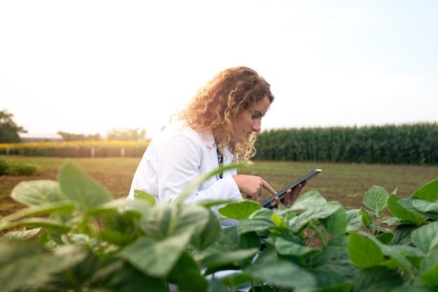 Weibliche agronomin, die ernten im feld mit tablet-computer prüft