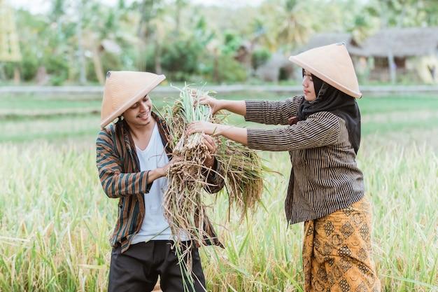Weibliche asiatische landwirte helfen männlichen landwirten, den reis zu tragen, den sie während der gemeinsamen ernte auf den feldern geerntet haben