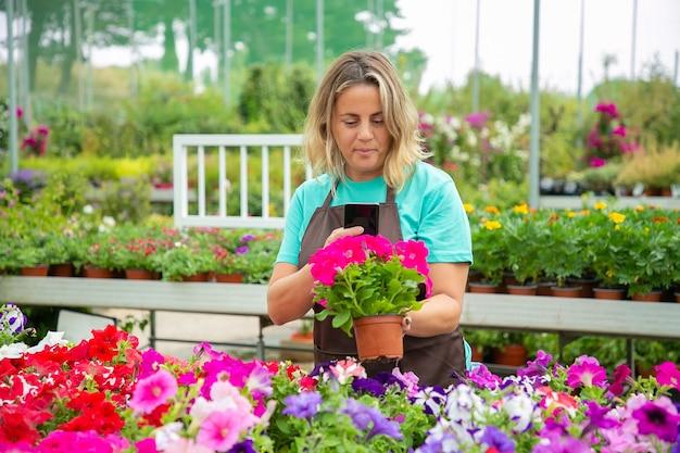 Weibliche gärtnerin, die foto von eingetopften petunienpflanzen am telefon macht