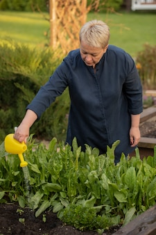 Weibliche gärtnerin, die frische salat-sauerampferpflanzen in den hochbeeten des gartens wässert