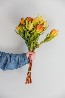Weibliche hände, die blumenstrauß des leucadendrons halten