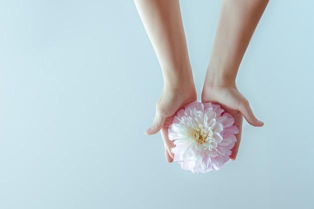 Weibliche hände, die eine empfindliche blume halten
