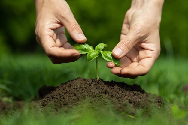 Weibliche hände, die junge pflanzenkonzepte der landwirtschaft und des umweltschutzes pflanzen