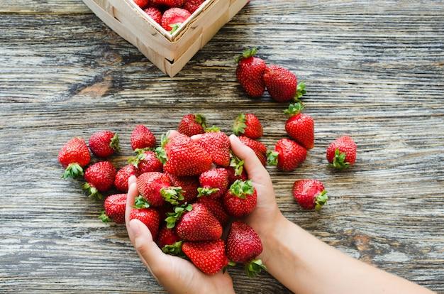 Weibliche hände halten eine handvoll frische reife erdbeeren. bio saftige beeren makro.
