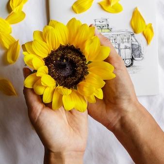 Weibliche hände halten schöne frische sonnenblume