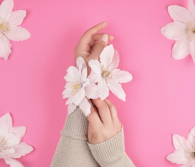 Weibliche hände und blühende weiße clematisknospen
