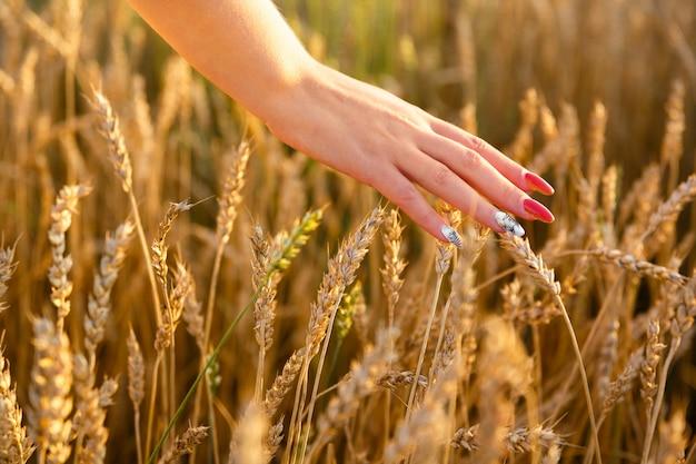 Weibliche hand, die ähren des weizens im weizenfeld streichelt