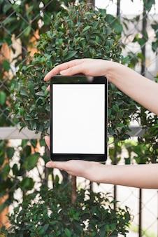 Weibliche hand, die digitale tablette mit leerem weißem bildschirm hält