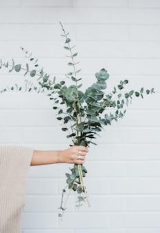 Weibliche hand, die einen blumenstrauß der schönen zimmerpflanzen hält